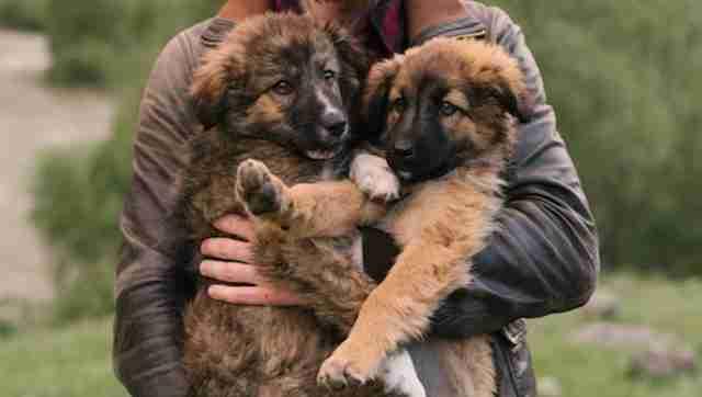 Take me home puppy