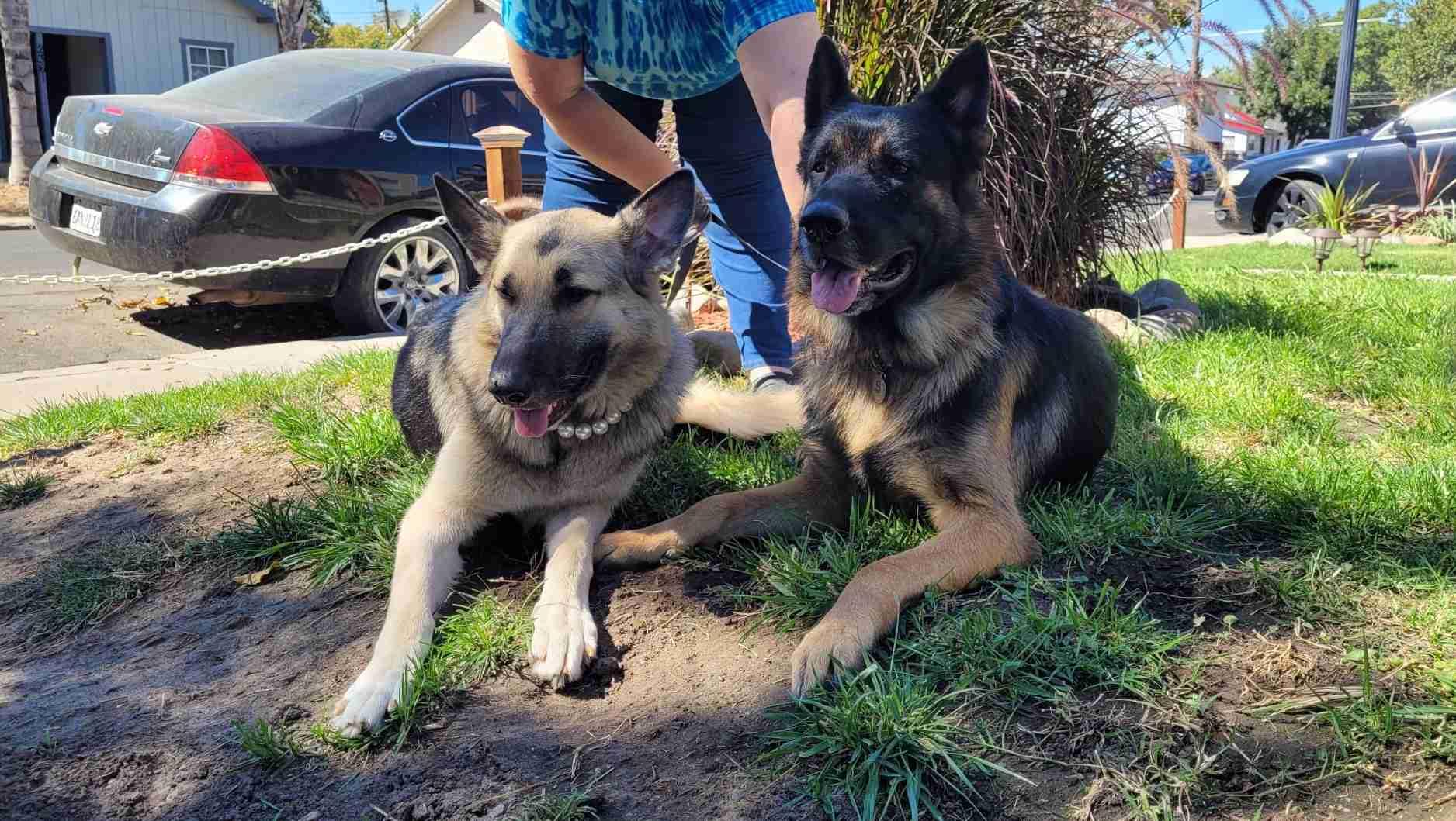 Sophie and Zeus